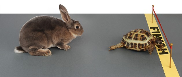 Hare Vs Tortoise The tortoise won